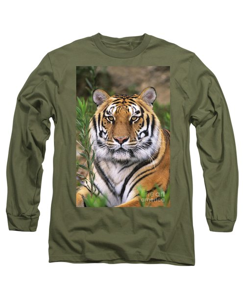 Siberian Tiger Staring Endangered Species Wildlife Rescue Long Sleeve T-Shirt by Dave Welling