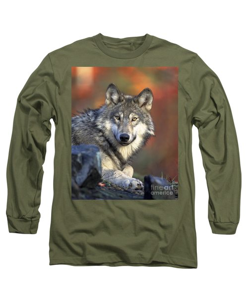 Long Sleeve T-Shirt featuring the photograph Wolf Predator Canidae Canis Lupus Hunter by Paul Fearn
