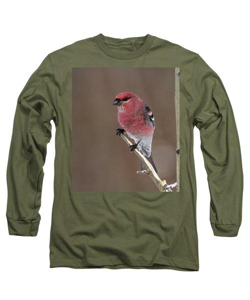 Pine Grosbeak Long Sleeve T-Shirt by Doug Lloyd