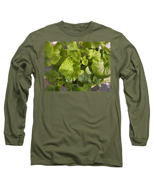 Long Sleeve T-Shirt featuring the photograph A Green Leafy Vegetable Plant After Watering In Bright Sunrise by Ashish Agarwal
