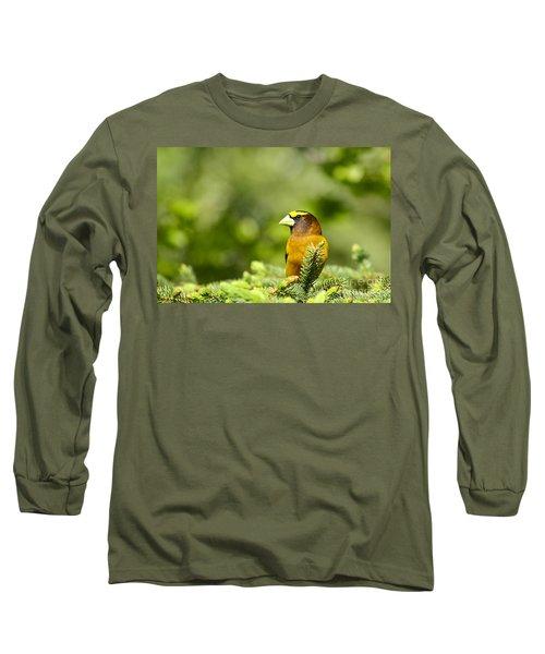 Evening Grosbeak Long Sleeve T-Shirt