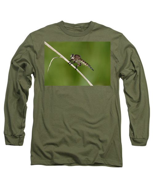 Giant Robber Fly - Promachus Hinei Long Sleeve T-Shirt by Daniel Reed