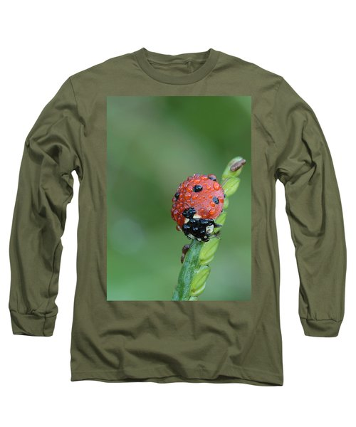 Seven-spotted Lady Beetle On Grass With Dew Long Sleeve T-Shirt by Daniel Reed