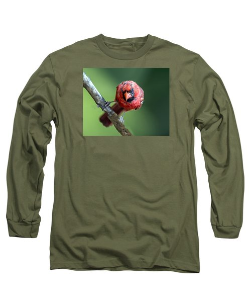 Male Cardinal Portrait Long Sleeve T-Shirt