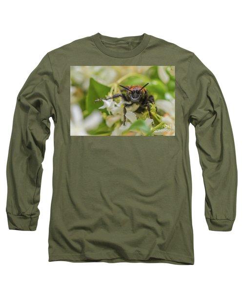 Long Sleeve T-Shirt featuring the photograph Mammoth Wasp Megascolia Maculata Maculata by Jivko Nakev