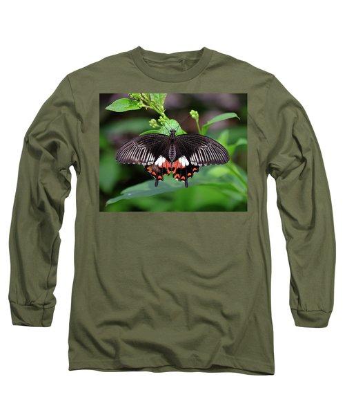 Great Mormon Butterfly Long Sleeve T-Shirt by Ronda Ryan