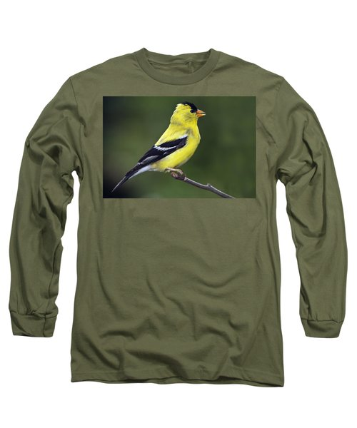 American Golden Finch Long Sleeve T-Shirt