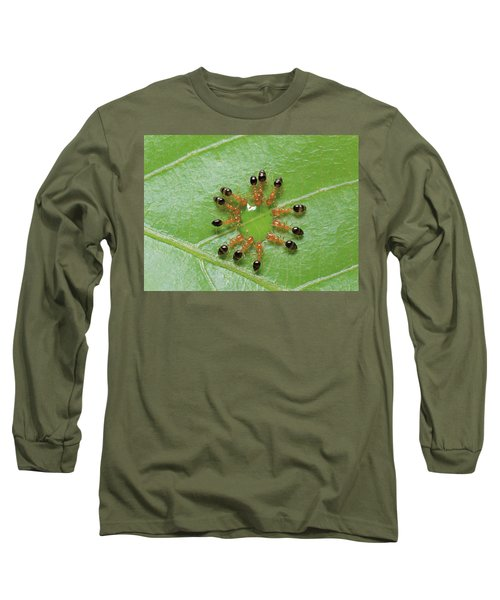 Ant Monomorium Intrudens Group Drinking Long Sleeve T-Shirt by Takashi Shinkai
