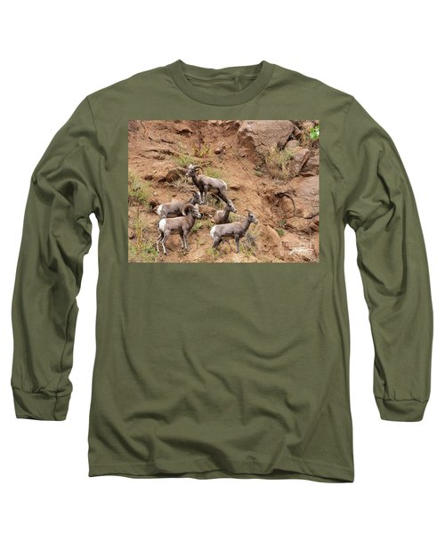 Big Horn Sheep Family Long Sleeve T-Shirt