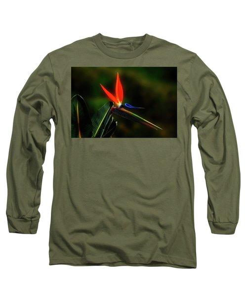 Bird Of Pardise Long Sleeve T-Shirt by Joseph Hollingsworth