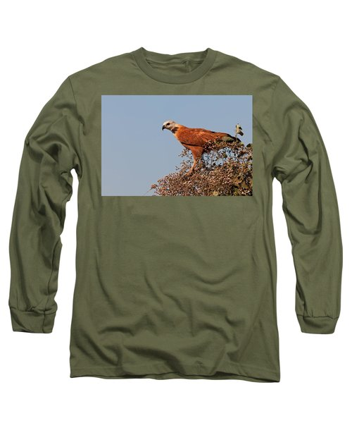Black-collared Hawk, Pantanal Long Sleeve T-Shirt by Aivar Mikko
