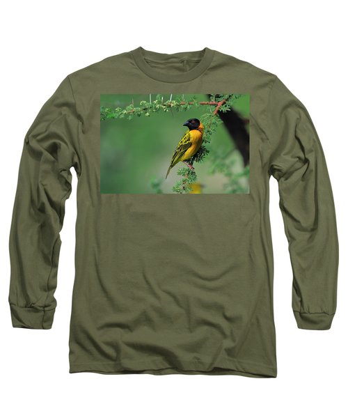 Black-headed Weaver Long Sleeve T-Shirt