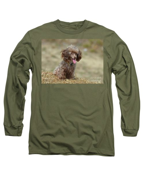 Brown Toy Poodle On Bail Of Hay Long Sleeve T-Shirt