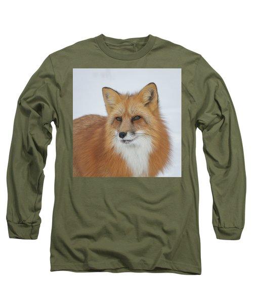 Curious Fox Long Sleeve T-Shirt by Jack Bell
