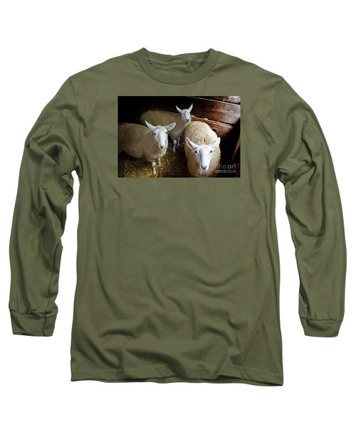 Curious Sheep Long Sleeve T-Shirt by Kevin Fortier