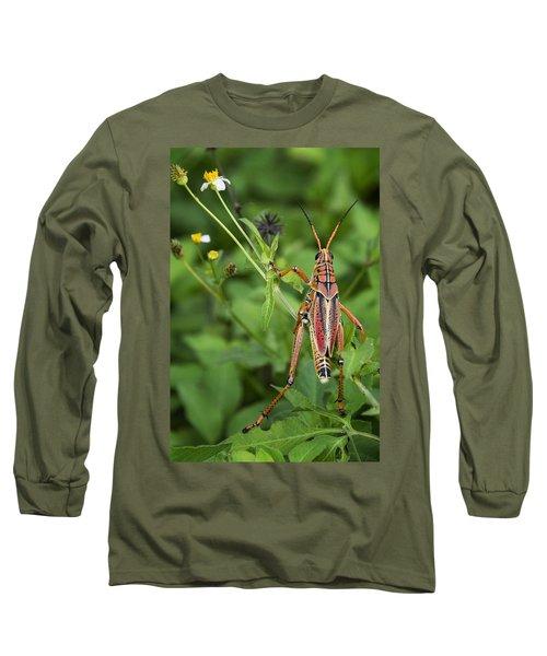 Eastern Lubber Grasshopper  Long Sleeve T-Shirt by Saija  Lehtonen