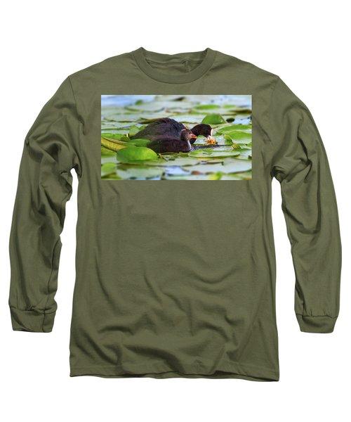 Eurasian Or Common Coot, Fulicula Atra, Duck And Duckling Long Sleeve T-Shirt by Elenarts - Elena Duvernay photo