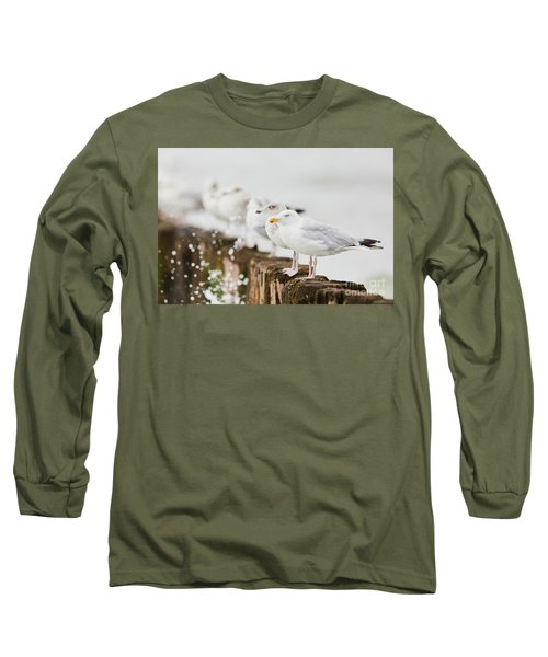 European Herring Gulls In A Row  Long Sleeve T-Shirt