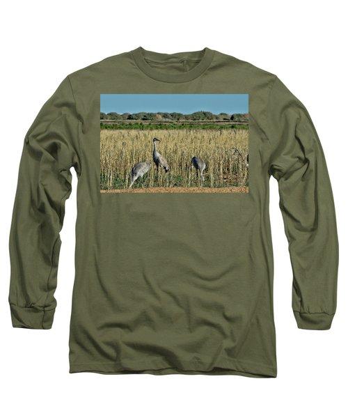 Feeding Greater Sandhill Cranes Long Sleeve T-Shirt by Daniel Hebard