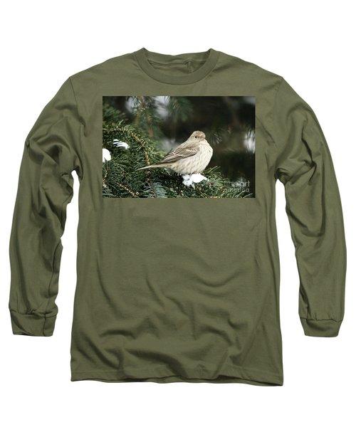 Female House Finch On Snow Long Sleeve T-Shirt