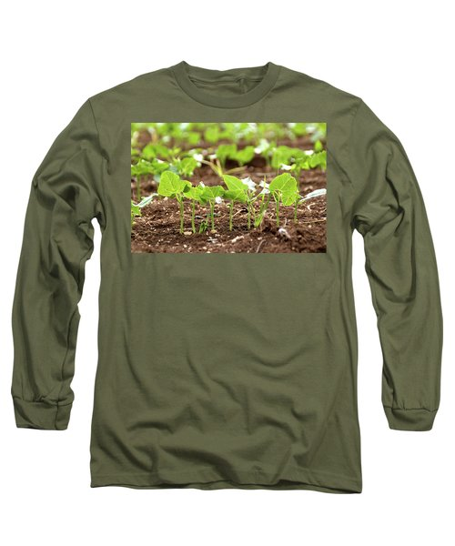 New Sprouts In The Promised Land Long Sleeve T-Shirt by Yoel Koskas