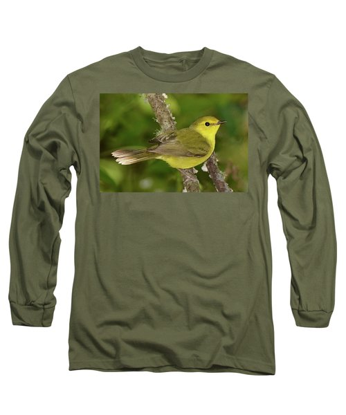 Hooded Warbler Female Long Sleeve T-Shirt by Alan Lenk