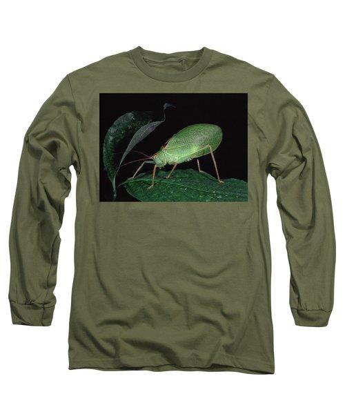 Katydid At Night Long Sleeve T-Shirt