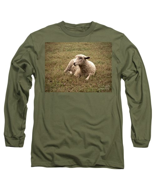 Leicester Sheep In The Dewy Grass Long Sleeve T-Shirt