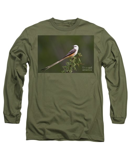 Male Scissor-tail Flycatcher Tyrannus Forficatus Wild Texas Long Sleeve T-Shirt by Dave Welling