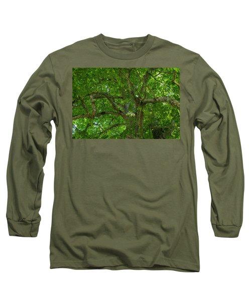 Old Linden Tree. Long Sleeve T-Shirt by Ulrich Burkhalter