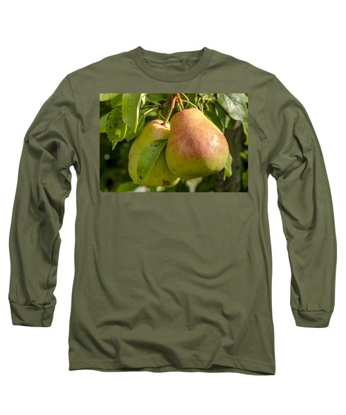 Organic Pears Hanging In Orchard Long Sleeve T-Shirt