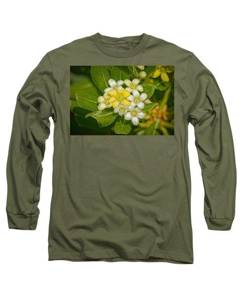 Pittosporum Flowers Long Sleeve T-Shirt