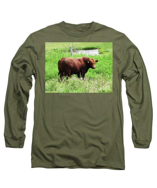 Red Angus Bull Long Sleeve T-Shirt