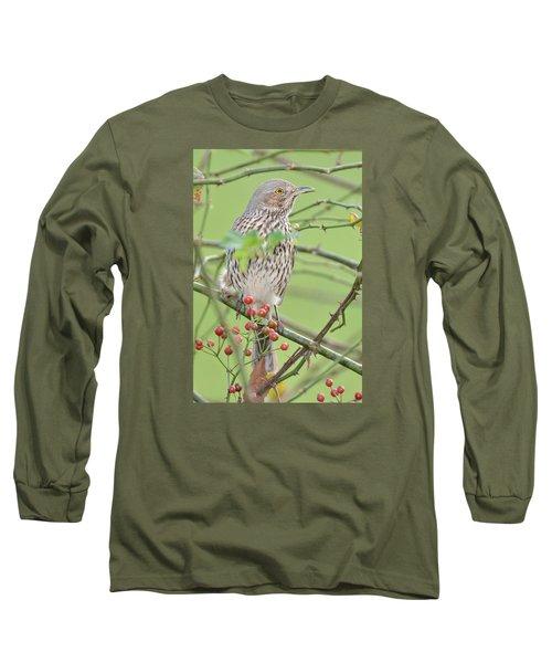 Sage Thrasher Long Sleeve T-Shirt by Alan Lenk