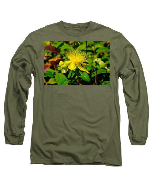 Saint John's Wort Blossom Long Sleeve T-Shirt
