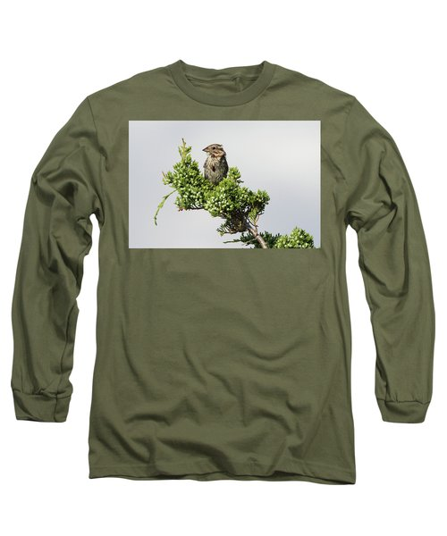 Song Sparrow Port Jefferson New York Long Sleeve T-Shirt