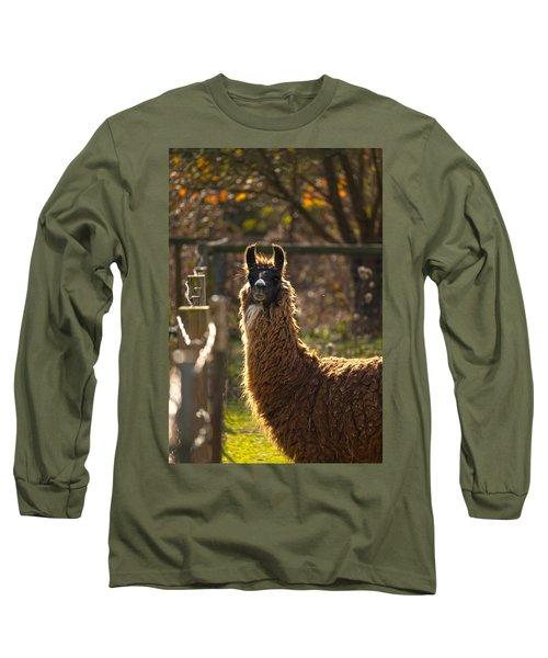 Staring Llama Long Sleeve T-Shirt