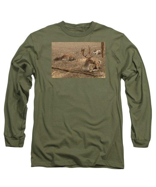 Three Deer Resting Long Sleeve T-Shirt