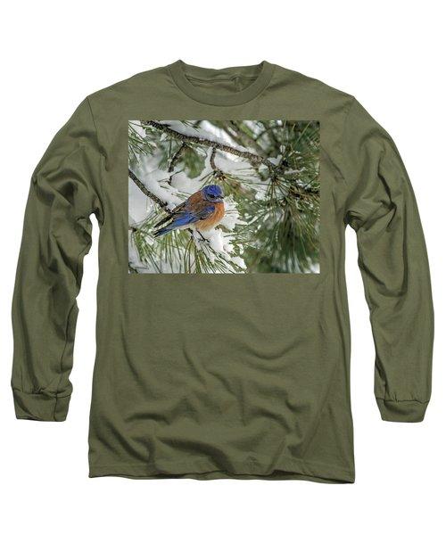 Western Bluebird In A Snowy Pine Long Sleeve T-Shirt