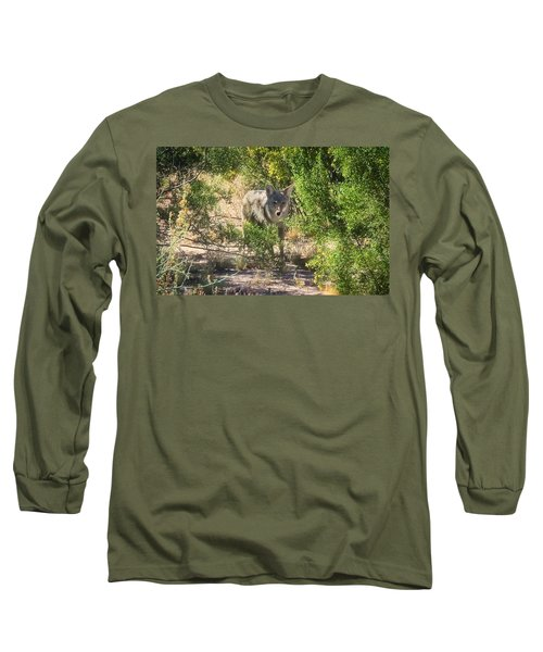 Cautious Coyote Long Sleeve T-Shirt