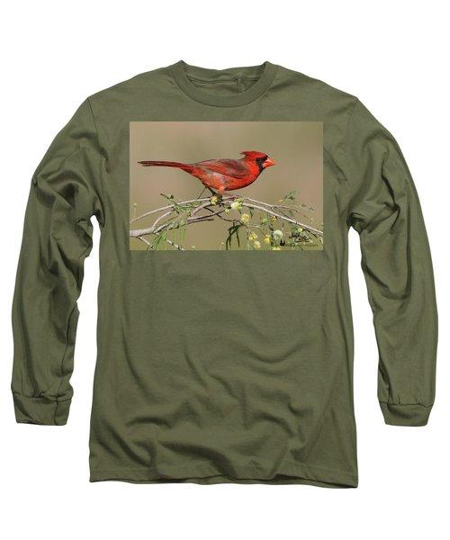 South Texas Cardinal Long Sleeve T-Shirt