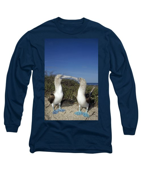 Blue-footed Boobies Courting Galapagos Long Sleeve T-Shirt by Tui De Roy