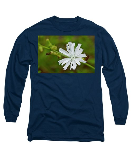 White Chicory  Rare Color Phase   Cichorium Intybus Long Sleeve T-Shirt