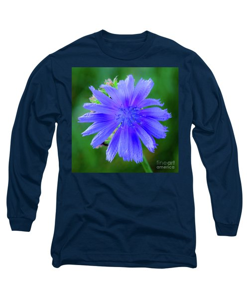 Vibrant Blue Chicory Blossom Close-up With Its Delicate Petals And Stamen Long Sleeve T-Shirt