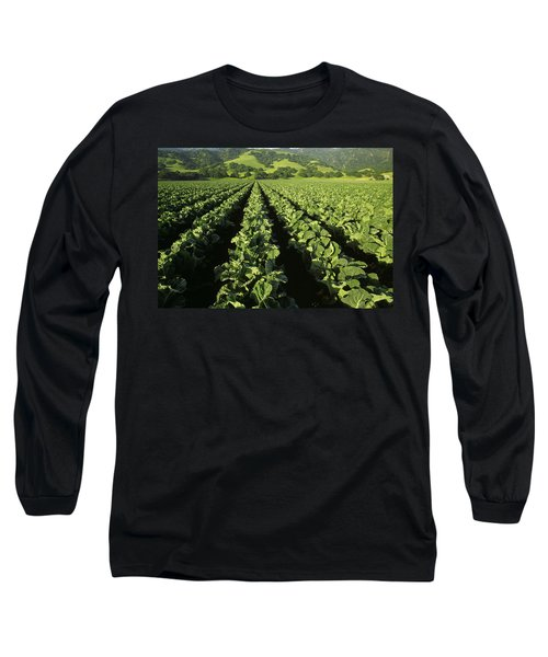 Agriculture - Mid Growth Cauliflower Long Sleeve T-Shirt by Ed Young