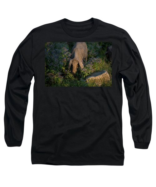 An Iberian Pig, The Source Of Iberico Long Sleeve T-Shirt