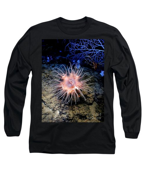 Long Sleeve T-Shirt featuring the photograph Anemone Sea Life Sea Ocean Water Underwater by Paul Fearn