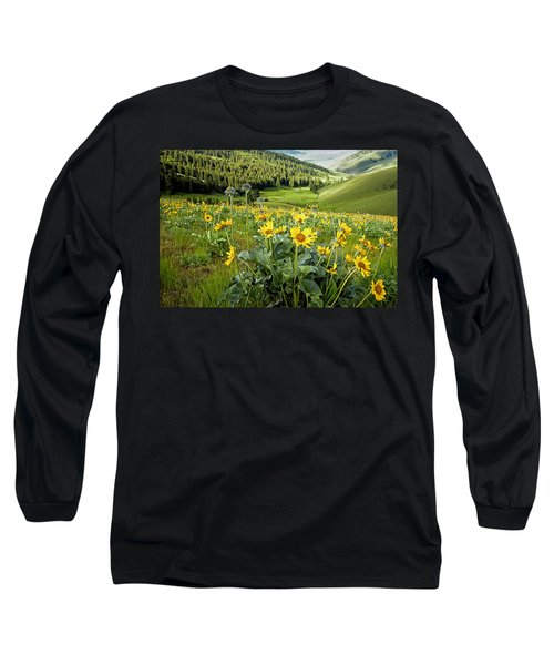 Long Sleeve T-Shirt featuring the photograph Arrow Leaf Balsam Root by Jack Bell