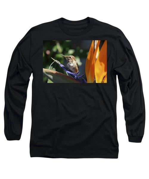Baby Hummingbird On Flower Long Sleeve T-Shirt