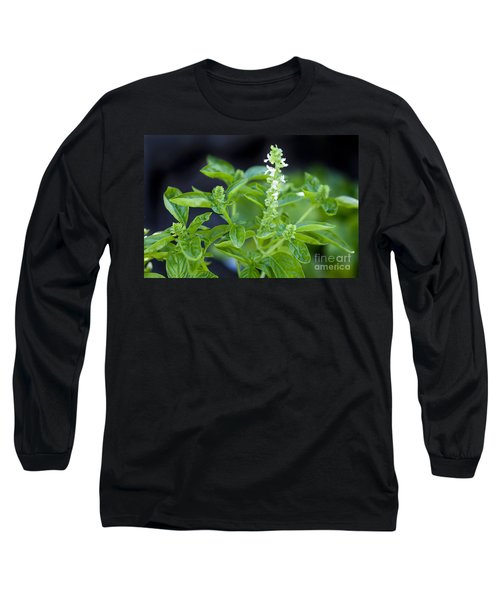 Basil With White Flowers Ready For Culinary Use Long Sleeve T-Shirt by David Millenheft
